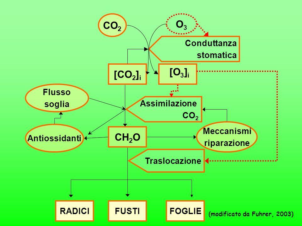 O3 [O3]i [CO2]i CH2O Assimilazione CO2 Flusso soglia Antiossidanti